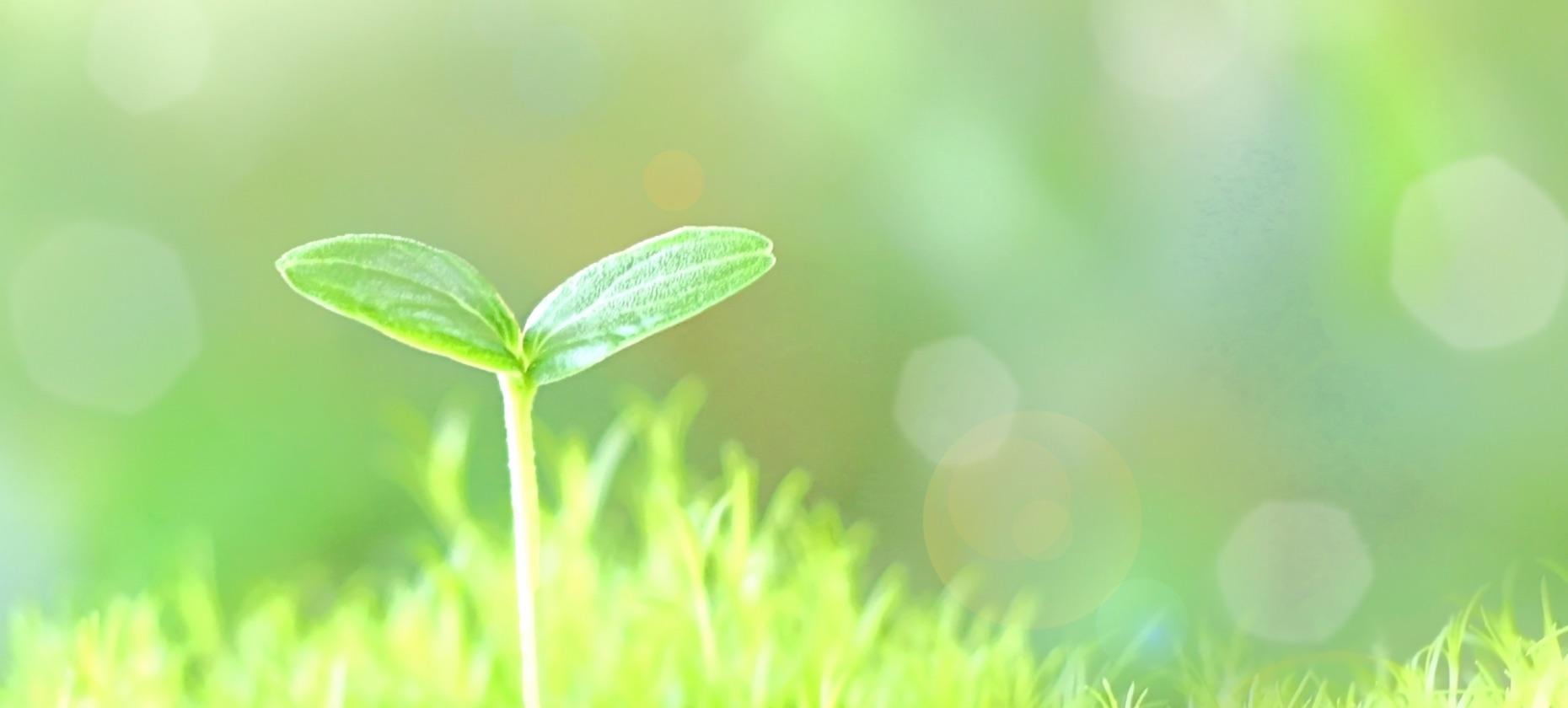当社の環境への取り組み